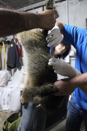 traçabilité animaux nés en captivité